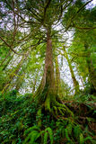 Árbol y helechos en bosque Fotografía de archivo