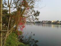 Árbol y lago Imágenes de archivo libres de regalías