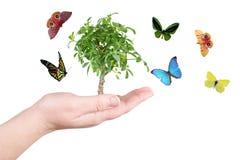 Árbol y mariposa Foto de archivo
