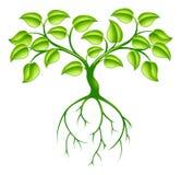 Árbol y raíces verdes Fotos de archivo libres de regalías
