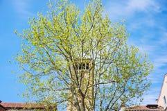 Árbol y torre Imagen de archivo libre de regalías