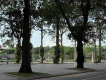 ?rboles altos de los ficus en uno de los parques de la ciudad de Siem Reap Verdes tropicales fotografía de archivo libre de regalías