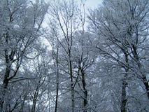 ?rboles cubiertos con nieve Bosque congelado foto de archivo libre de regalías