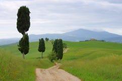 Árboles de ciprés de Toscana con la pista Imagenes de archivo