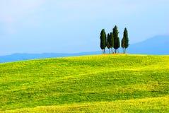 Árboles de Cypress y campos verdes Imagenes de archivo