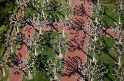 Opinión de árbol de Berkeley B1a Fotografía de archivo