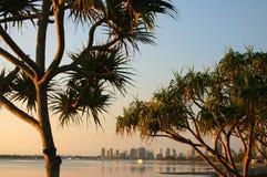 Árboles del Pandanus en la madrugada Imagenes de archivo