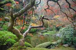 Árboles del zen Foto de archivo libre de regalías