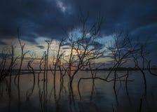 Árboles en agua Imágenes de archivo libres de regalías