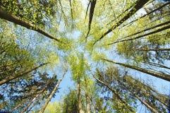 Árboles en bosque Fotos de archivo libres de regalías