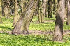 Árboles en el parque Foto de archivo libre de regalías