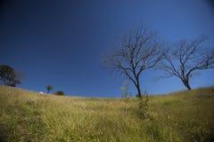 Árboles en la colina debajo de un cielo azul Foto de archivo