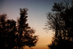 Árboles en noche Fotografía de archivo
