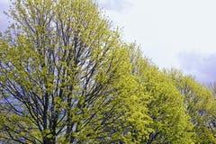 Árboles en resorte temprano Foto de archivo libre de regalías