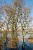 Árboles en tierra inundada Fotografía de archivo