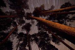 Árboles en un bosque con los rastros de la estrella Fotografía de archivo libre de regalías