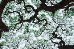 Árboles forestales. Fotos de archivo