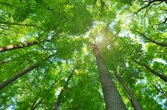 Árboles forestales de la naturaleza Imagen de archivo libre de regalías