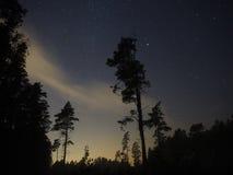 Árboles forestales y estrellas de la noche Imagenes de archivo