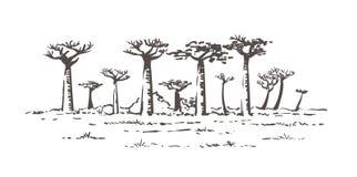 ?rboles hermosos del baobab en Madagascar Paisaje con los árboles inusuales Ejemplo exhausto del bosquejo de la mano de Madagasca ilustración del vector