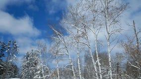 ?rboles hermosos del ?lamo tembl?n en el bosque despu?s de nevadas con el sol que brilla a trav?s de las nubes metrajes