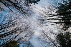 Árboles que suben a través del cielo Imagen de archivo libre de regalías
