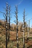 Árboles quemados Foto de archivo libre de regalías