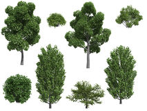 Árboles y arbustos de álamo Fotografía de archivo libre de regalías