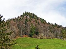 ?rboles y bosque mezclado en primavera temprana en las cuestas entre el lago lucerne y el pico de Gersauerstock imágenes de archivo libres de regalías