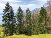 ?rboles y bosque mezclado en primavera temprana en las cuestas entre el lago lucerne y el pico de Gersauerstock foto de archivo libre de regalías