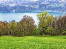 ?rboles y bosque mezclado en primavera temprana en las cuestas entre el lago lucerne y el pico de Gersauerstock imagenes de archivo