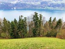 ?rboles y bosque mezclado en primavera temprana en las cuestas entre el lago lucerne y el pico de Gersauerstock fotografía de archivo libre de regalías