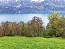 ?rboles y bosque mezclado en primavera temprana en las cuestas entre el lago lucerne y el pico de Gersauerstock fotos de archivo libres de regalías