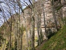 ?rboles y bosque mezclado en primavera temprana en las cuestas entre el lago lucerne y el pico de Vitznauerstock fotos de archivo libres de regalías