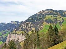 ?rboles y bosque mezclado en primavera temprana en las cuestas entre el lago lucerne y el pico de Vitznauerstock imagen de archivo