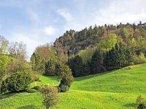 ?rboles y bosque mezclado en primavera temprana en las cuestas entre el lago lucerne y el pico de Vitznauerstock imagenes de archivo