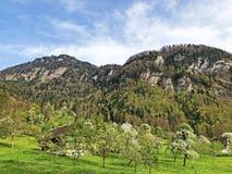 ?rboles y bosque mezclado en primavera temprana en las cuestas entre el lago lucerne y el pico de Vitznauerstock fotografía de archivo libre de regalías
