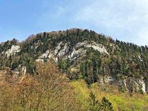 ?rboles y bosque mezclado en primavera temprana en las cuestas entre el lago lucerne y el pico de Vitznauerstock imagen de archivo libre de regalías