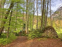 ?rboles y bosque mezclado en primavera temprana en las cuestas entre el lago lucerne y el pico de Vitznauerstock fotografía de archivo