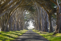 Árboles y camino frecuentados Imagen de archivo