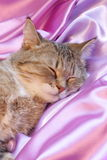 Cat on pink : Valentines Day Card - Stock Photos. Cat sleeping on pink silk - Valentines Day Card : sweet dreams stock photo