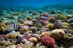 Récif coralien, la Mer Rouge, Egypte Images libres de droits