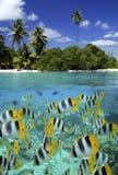 Récif coralien - Tahiti dans la Polynésie française Image stock