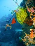 Récif coralien tropical Photos stock
