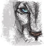 Räcka utdraget skissar av en lion Royaltyfri Bild