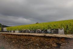 Récolte de raisin Photographie stock libre de droits
