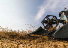 Récolte de soja en automne Photos libres de droits