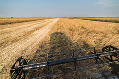 Récolte de soja en automne Image stock