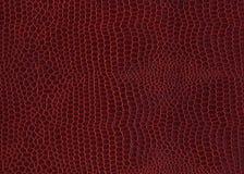 Röd bakgrund för krokodilhud Royaltyfri Foto