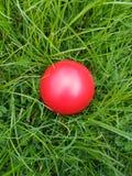 Röd boll på gräs Fotografering för Bildbyråer